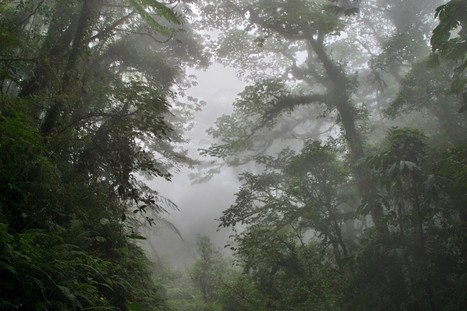 Dealing with climate change in Costa Rica's treasured Monteverde cloud forest | Farming, Forests, Water, Fishing and Environment | Scoop.it
