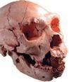Bienvenido a Arqueolab - web sobre Prehistoria y Atapuerca | Cuarto de Ana Soto | Scoop.it