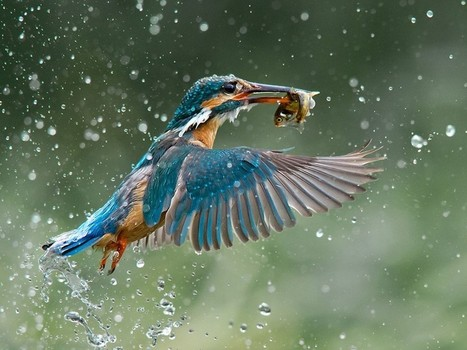 7 Breathtaking Winners Of The 2014 Wilderness Photo Competition » Fascinating Pics   Inspirational Photography to DHP   Scoop.it