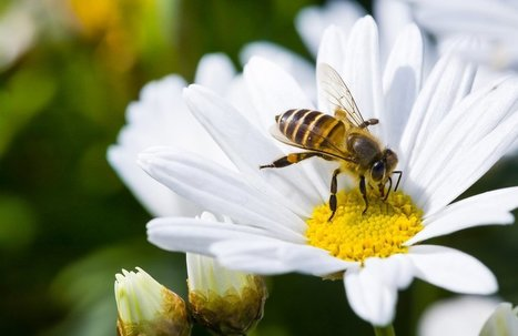 Research from Neonicotinoid Pesticide Producers Confirms They're Dangerous for Honeybees | Organic Farming | Scoop.it
