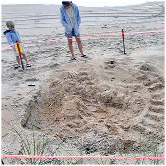 First leatherback sea turtle nest discovered - Historic City News | Coral Reef Ecology | Scoop.it