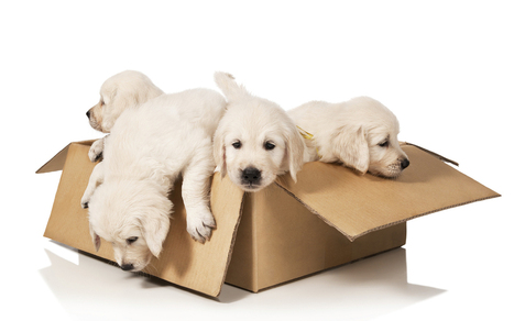7 Tips for Moving with Your Pets - Parade | Home improvements | Scoop.it