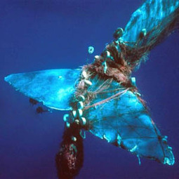 #apathy The World's Deadliest Bycatch and as always the #USA tops the list #FF | Messenger for mother Earth | Scoop.it