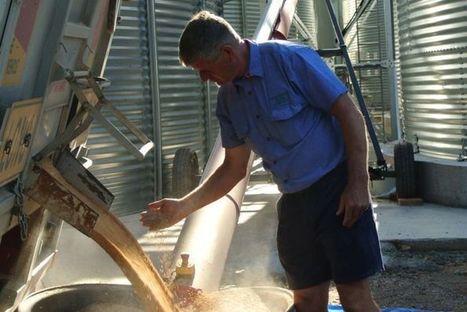 Australia's organic grain industry struggling to meet demand | GarryRogers Biosphere News | Scoop.it