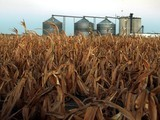 Drought Withers U.S. Corn Crop, Heats Debate on Ethanol | Sustain Our Earth | Scoop.it