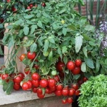 Vegetables in Pots Are a Moveable Feast | BDN Maine blogs | Container Gardening | Scoop.it