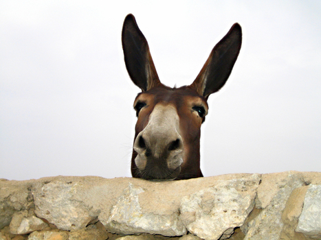 Virginia Farrier Seriously Injured by Guard Donkey | horse-celebrities | Scoop.it