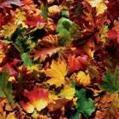 Dementie & voorlezen: voorlezen over de herfst bij dementie | Lezen voor iedereen | Scoop.it