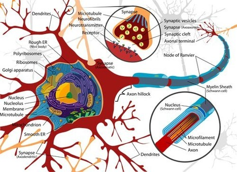 "Lo interpersonal en el cerebro cambiante, la neurobiología del ""nosotros"": The Neurobiology of ""We"" 
