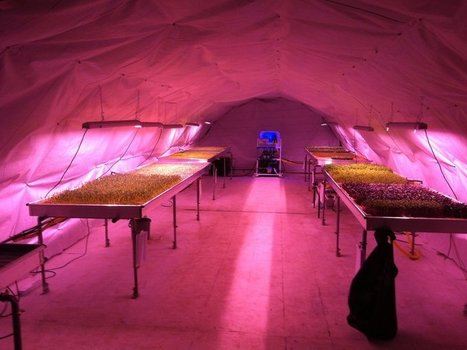 Would you eat a salad grown in a bomb shelter? | D_sign | Scoop.it