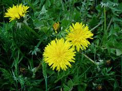NOMBRES COMUNES DE PLANTAS | rioMoros | Recursos de Botánica para Secundaria | Scoop.it