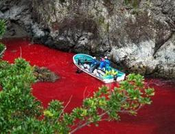 New Japanese method for killing dolphins is inhumane - life - 12 April 2013 - New Scientist | Nature Animals humankind | Scoop.it
