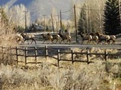 Physics class studies deer and elk collisions - Idaho Mountain Express and Guide | Ciencia-Física | Scoop.it