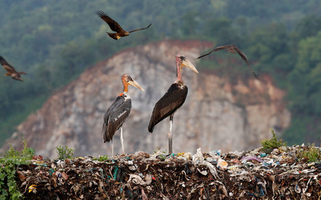 All-Women 'Army' Protecting Rare Bird in India | Zero Waste Europe | Scoop.it