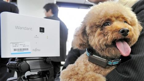 Fujitsu Wandant 2 : State-of-the-art dog monitoring via smartphone to hit shelves | Quantified Pet | Scoop.it