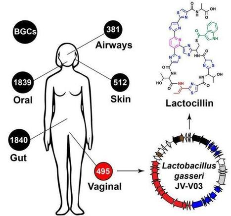 Nuestro organismo, una desconocida fuente de medicamentos | News-mc | Scoop.it