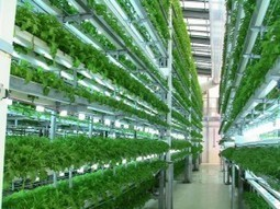 Innovation of the Month: Aeroponic Technology | Organic Farming | Scoop.it
