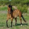 Equine Bodywork