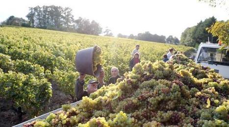 Le gel d'avril a tué 50 % de la récolte en Touraine | TRADCONSULTING 4 YOU | Scoop.it