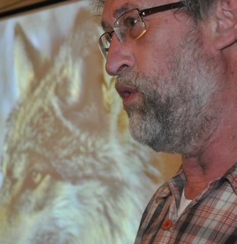 Le loup revient, ce n'est pas un monstre   Le retour du loup et du lynx en Belgique   Scoop.it
