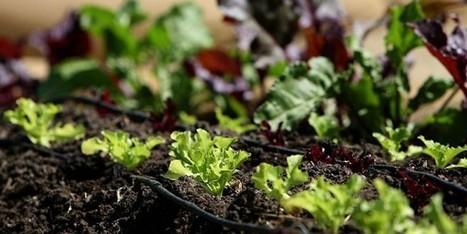 How to Start an Organic Garden in 9 Easy Steps | URBAN GARDEN | Scoop.it