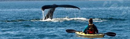 Petit tour du monde du langage du tourisme responsable.... | Voyage - Tourisme responsable | Scoop.it
