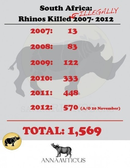South Africa: 570 Rhinos Killed in 324 Days :: ANNAMITICUS | Wildlife and Environmental Conservation | Scoop.it
