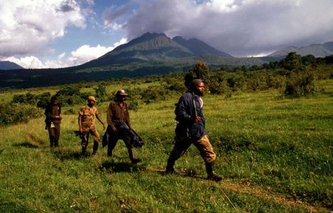 Des milices armées présentes dans le parc | Virunga - WWF | Scoop.it