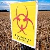 Whole Foods Accused of Accepting Genetically Modified Foods ... | GMOs | Scoop.it