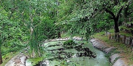 Sud-Aveyron : le Jardin des Enclos vaut tours et détours au Viala-du-Tarn | L'info tourisme en Aveyron | Scoop.it
