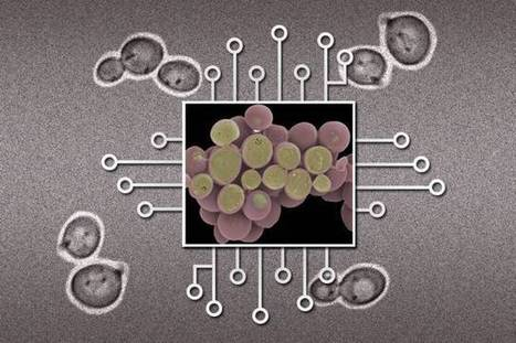 New device could make large biological circuits practical | Amazing Science | Scoop.it