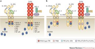 Toll-like receptors and chronic inflammation in rheumatic diseases: new developments : Nature Reviews Rheumatology : Nature Publishing Group | Rheumatology-Rhumatologie | Scoop.it