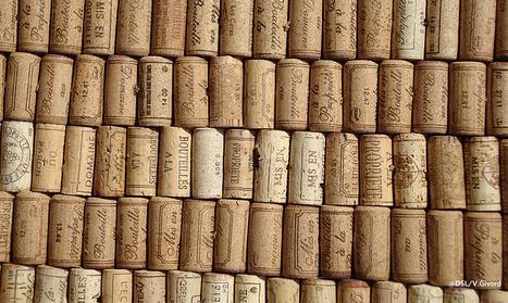 En Saône-et-Loire, l'actualité est riche en avril et mai autour du vin   Destination Saône-et-Loire   Scoop.it
