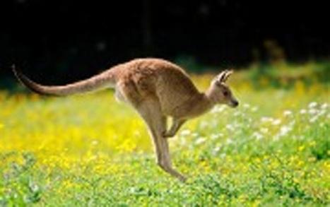 Kangaroo balance | Animal Management | Scoop.it