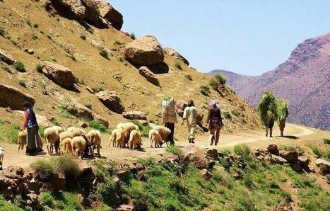 Morocco Tours & Travel - Morocco - Tailor-made Tours, Excursions & Day Trips, Marrakech, Essaouira, Ouarzazate, Zagora, Dades Valley, Sahara Camel Treks - Morocco Safaris Rural Tours 2014   Morocco Travel with Local   www.glampingmorocco.com   Scoop.it