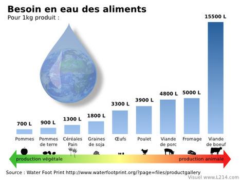 Gaspillage et pollution de l'eau : l'impact de la viande de bœuf | Autres Vérités | Scoop.it