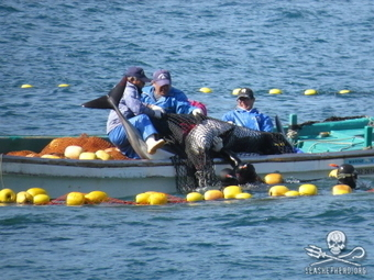 #SeaWorld & co, #WAZA & #IMATA & Their Collaboration with the #DolphinSlaughter in #Japan ~ by: Erwin Vermeulen | Rescue our Ocean's & it's species from Man's Pollution! | Scoop.it