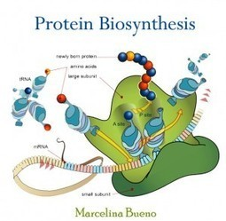 Protein Biosynthesis | E-books on Biotechnology & Bio-Chemistry | E-Books India | Scoop.it