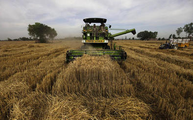 Letter: Wheat weight - Deseret News | Global Milling | Scoop.it