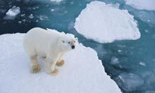 Oil rush in the Arctic gambles with nature and diplomacy | In Deep Water | Scoop.it