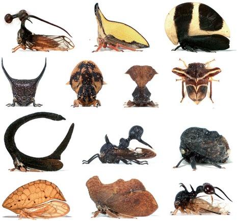8 - Revenons-en à notre prétendue suprématie...   EntomoScience   Scoop.it