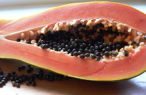 Papaya seeds, natural remedy for Dengue Fever in Costa Rica | LOCAL HEALTH TRADITIONS | Scoop.it