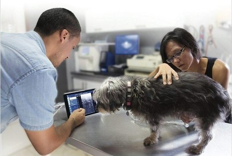 Que peut l'e-santé pour nos animaux de compagnie? - Edition du soir Ouest France - 11/11/2016 | Quantified Pet | Scoop.it