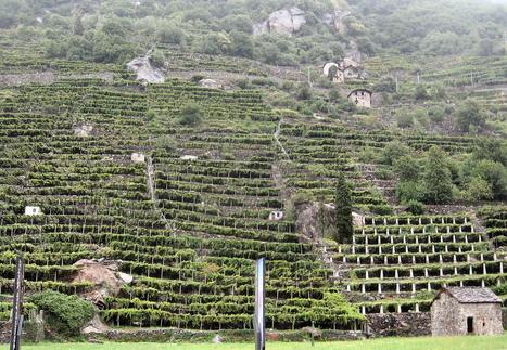 Weekly Wine Quiz #33 - Aosta Valley | Vino in Love | Scoop.it