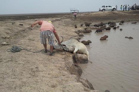 Insisten en que petroleras no tienen que ver con sequía en Casanare   GESTION DEL CONOCIMIENTO   Scoop.it