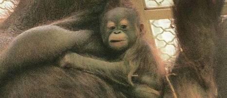 Si l'animal n'est pas un meuble, quels sont ses droits ? | Protection animale | Scoop.it