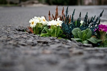 "Bomba de sementes ""rebenta"" com zonas urbanas e jardins   Eco   Scoop.it"