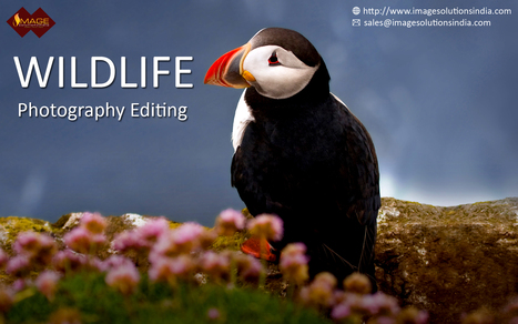 Wildlife Photo Retouching Services – Retouch Wildlife Photography | Outsource image editing services, Image Editing Services | Scoop.it