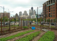 Farm City - Huffington Post | green streets | Scoop.it