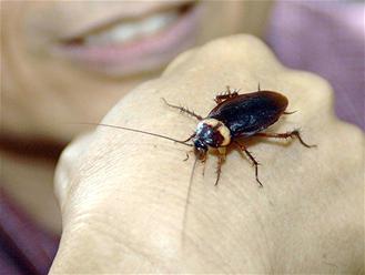 Un maire du Jura appelle l'Etat à l'aide pour se débarrasser des blattes | Le petit musée des cafards | Scoop.it